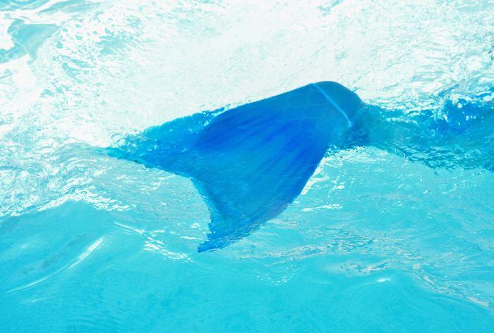 Blue mermaid tale in water.